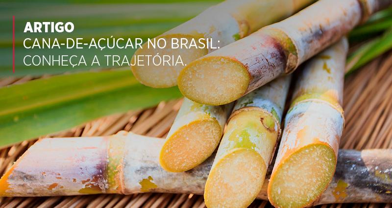 Cana-de-açúcar no Brasil: conheça a trajetória