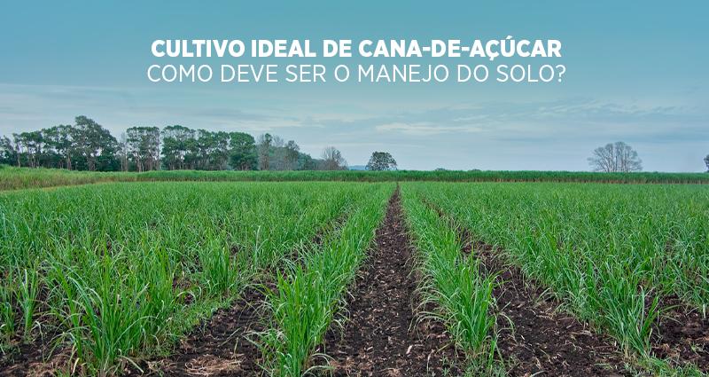 Cultivo ideal de cana-de-açúcar: como deve ser o manejo do solo?
