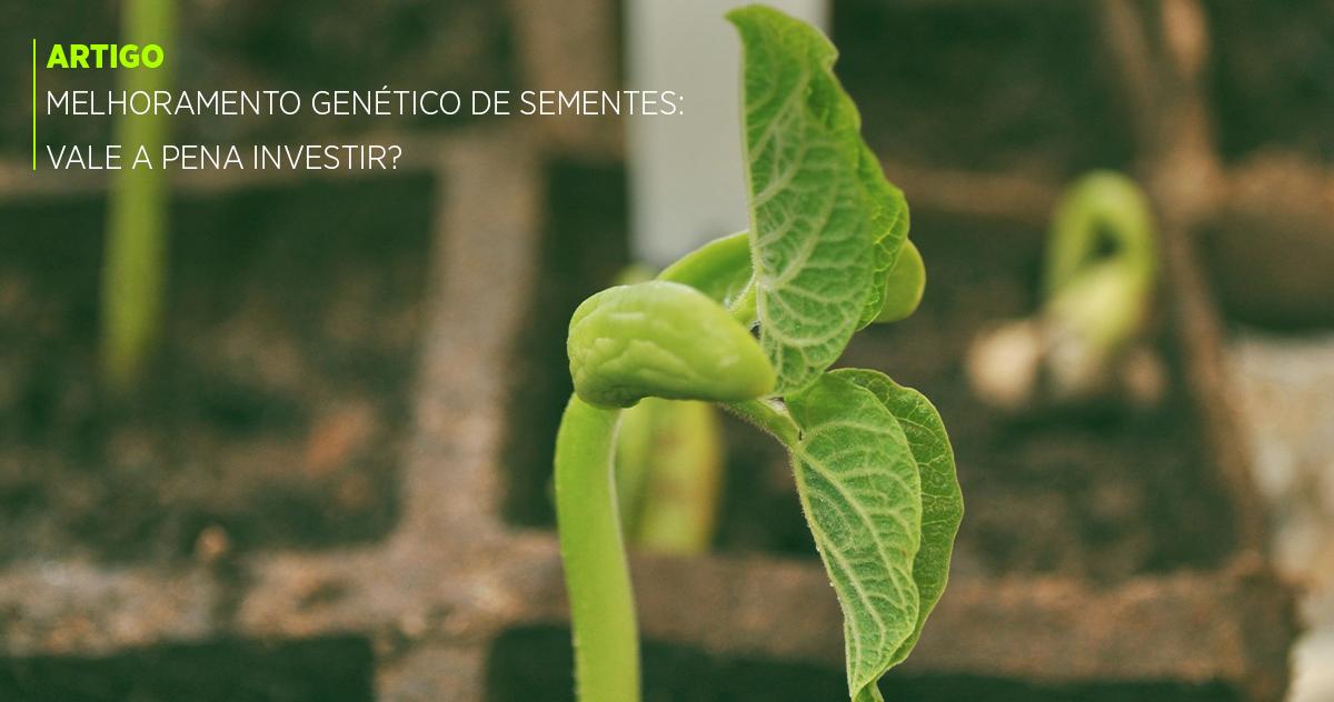 Melhoramento genético de sementes: vale a pena investir?