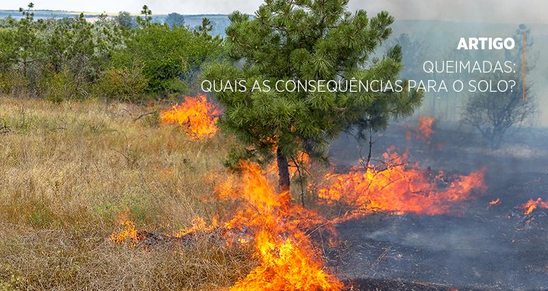 Queimadas: quais as consequências para o solo?