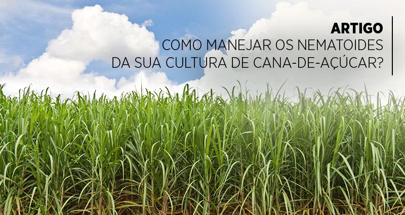 Como manejar os nematoides da sua cultura de cana-de-açúcar?