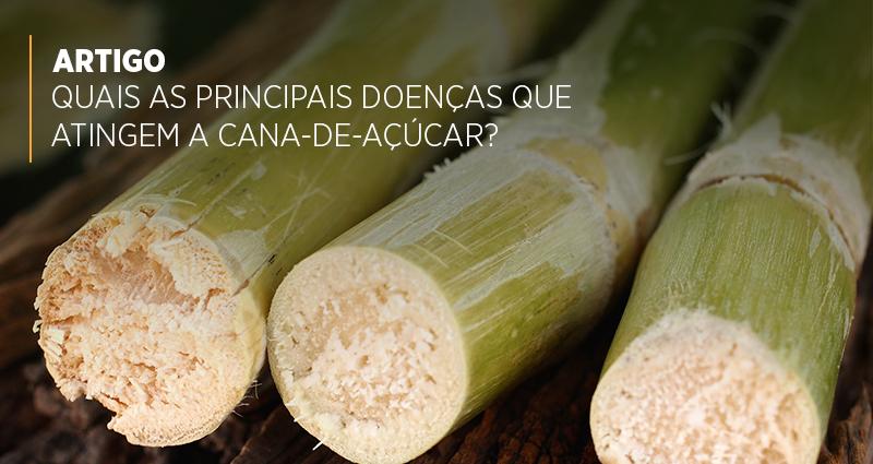 Quais as principais doenças que atingem a cana-de-açúcar?